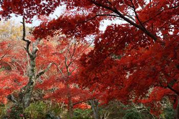 genjiyama00457B.jpg