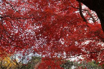 genjiyama00472B.jpg