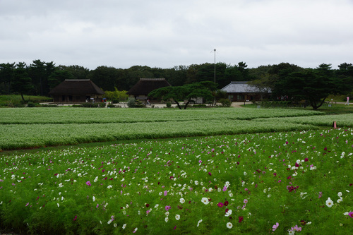 hitachi204B_DSC04098.jpg