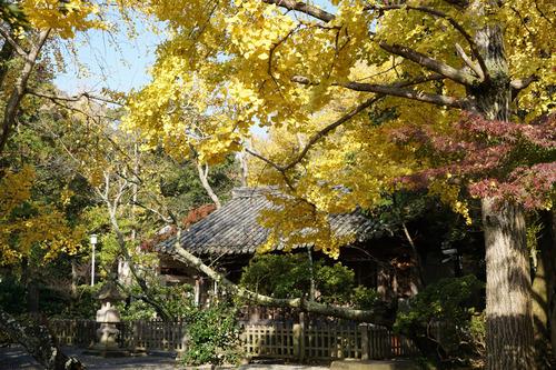 kamakura304B_DSC02993.jpg