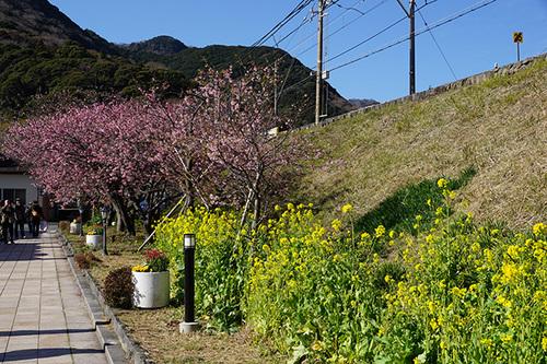 kawazu107s_DSC07873.JPG