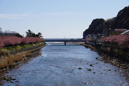 kawazu201s_DSC07960.JPG