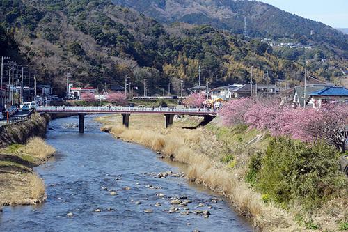 kawazu215s_DSC08044.JPG