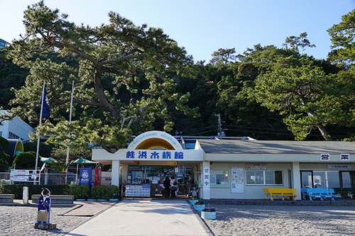 kouchi411s_DSC02459.JPG