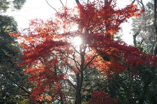 kamakura205B_DSC02944.jpg