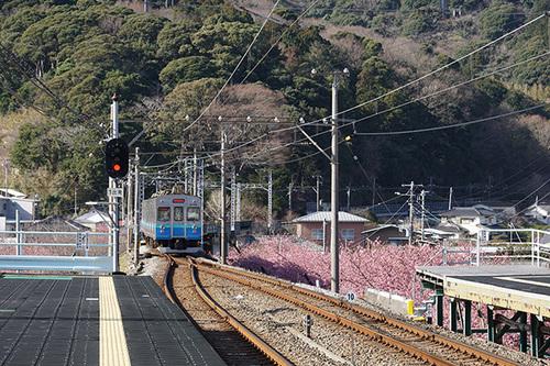 kawazu106s_DSC07862.JPG