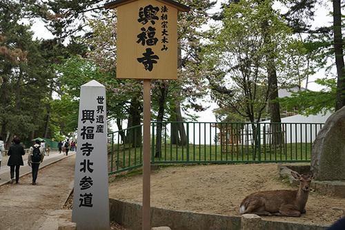 narakyoto115s_DSC06263.JPG