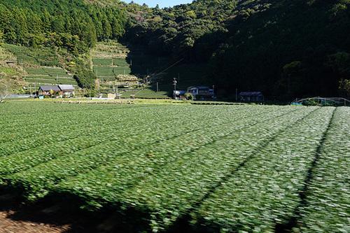 ooigawa210s_DSC01398.JPG